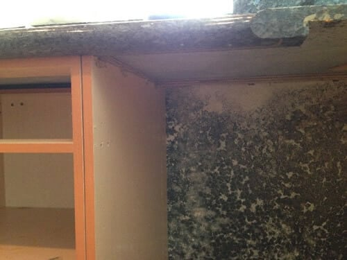 Mold Damage - Reliant Adjusters Group